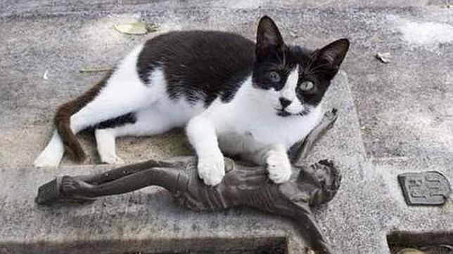 El misterioso gato que visita la tumba de su dueño a diario