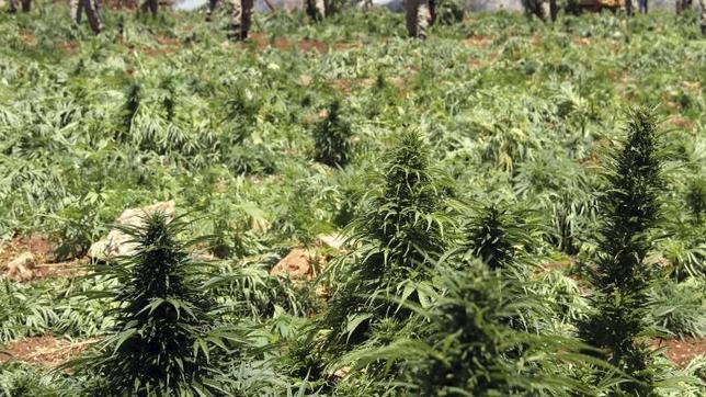 Obama dará más libertad a los estados para legalizar el consumo de marihuana
