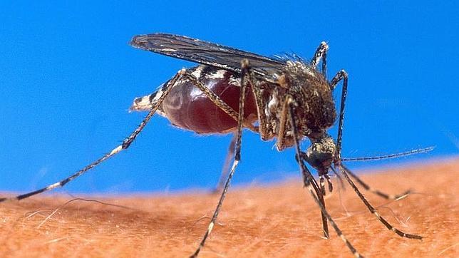 romper el ciclo del parásito de la malaria en mosquitos con vacunas