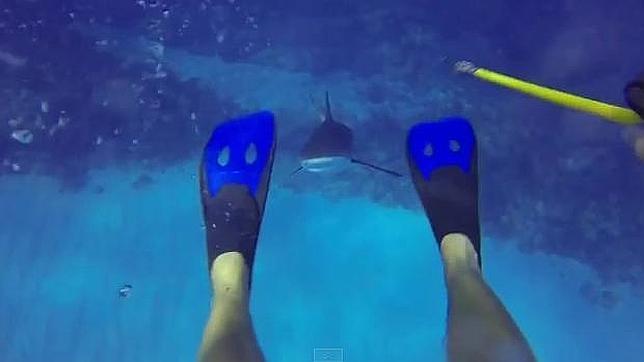 El tiburón se acerca al submarinista Jason Dimitri, en el Caribe