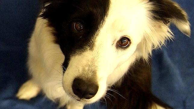 Cinco cosas que debes saber para que tu perro te haga caso