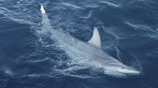 Una mujer muere por el ataque de un tiburón en Australia