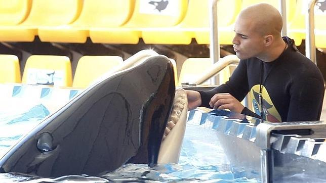 Morgan, la orca varada en Holanda, se queda en el Loro Parque de Tenerife