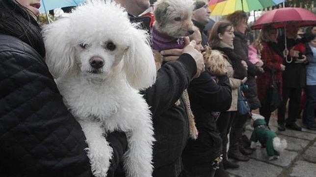 Turquía impondrá cursos obligatorios de formación a los dueños de mascotas