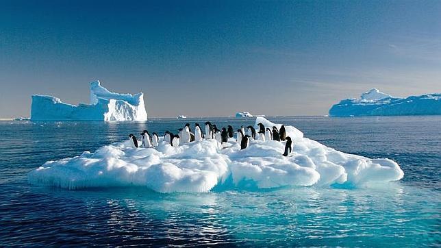 Descubren la presencia de un virus distinto de la gripe aviar en un grupo de pingüinos adelaida de la Antártida