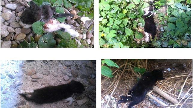 Encuentran a cuatro cachorros de gato descuartizados en el Hospital de La Paz