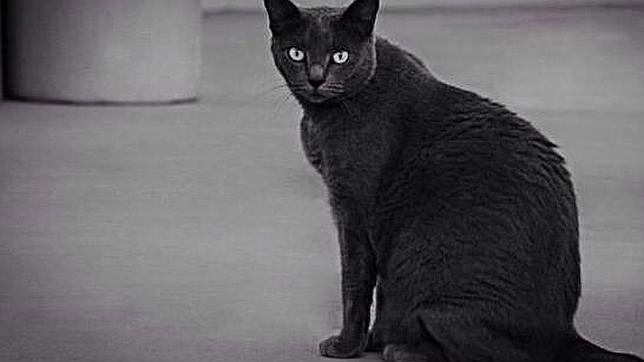 El gato negro, símbolo de mala suerte en el Martes y 13
