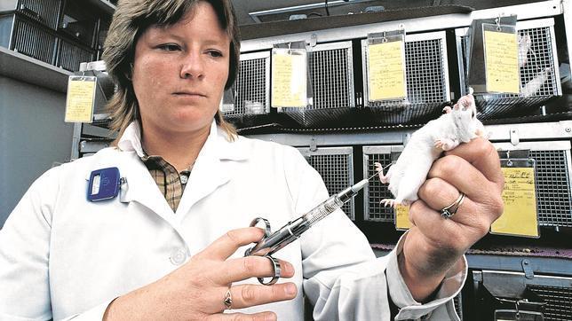 Una investigadora inyecta un fármaco en un ratón de laboratorio