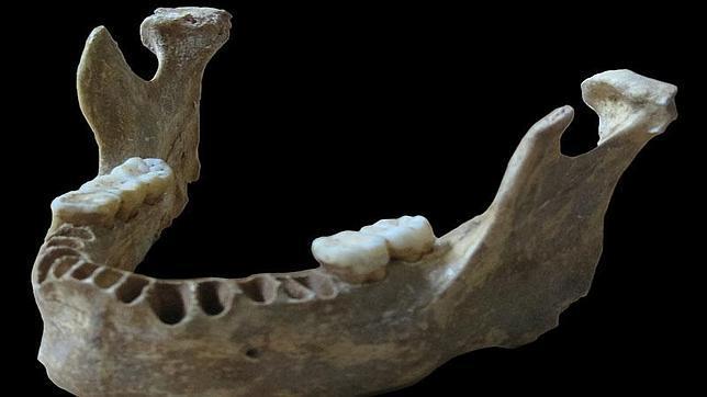 La mandíbula del humano hallado en Rumanía con casi un 10% de ADN neandertal