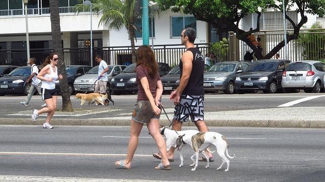 Se calcula que en Nueva York hay más de 600.000 perros
