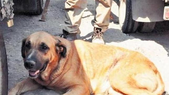 «Reina», la perra que amamantó a un niño en Chile