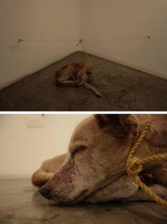 ABC  Dos imágenes del perro al que Guillermo Vargas mató de hambre