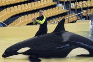 orca, loro, parque, mata, entrenadores, atacarlo, ensayo