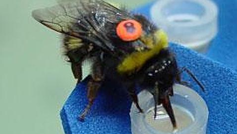 Un complejo problema matemático, resuelto por las abejas