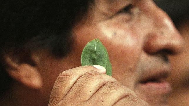 España apoya la campaña de Evo Morales por despenalizar la hoja de coca