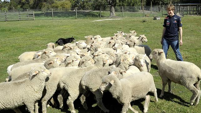 Galería: Sebastian Vettel prueba suerte como pastor de ovejas