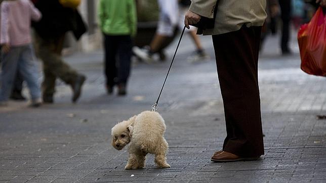Madrid recoge un 22% menos de cacas de perro