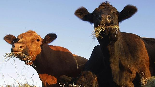 La primera carne artificial será realidad en otoño