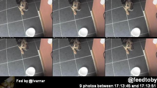 El perro que se alimenta por Twitter