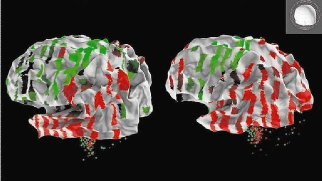 El atlas completo del cerebro