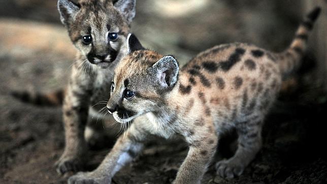 Costa Rica, a punto de prohibir la caza como deporte