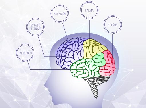 Áreas del cerebro.
