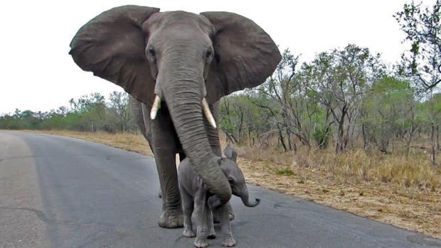 Una madre protege a su cría frente a varios turistas