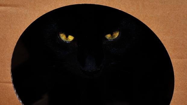 Según la paradoja del gato de Schrödinger, un gato que tiene un 50 por ciento de probabilidades de morir dentro de una caja, está vivo y muerto antes de abrir el recipiente