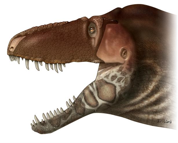 Recreación del Daspletosaurus horneri basada en la distribución de la textura de sus huesos faciales