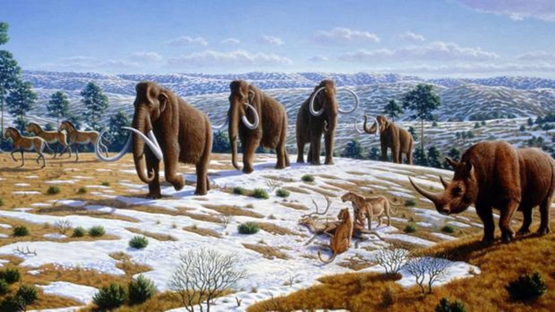 La larga extinción que hará que la vaca sea el mayor animal terrestre en 200 años