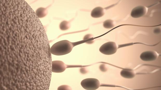 Solo uno entre millones de espermatozoides fecunda al óvulo