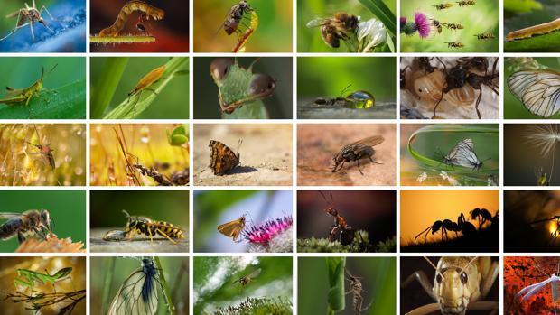 Qué ocurriría si desaparecieran los insectos?