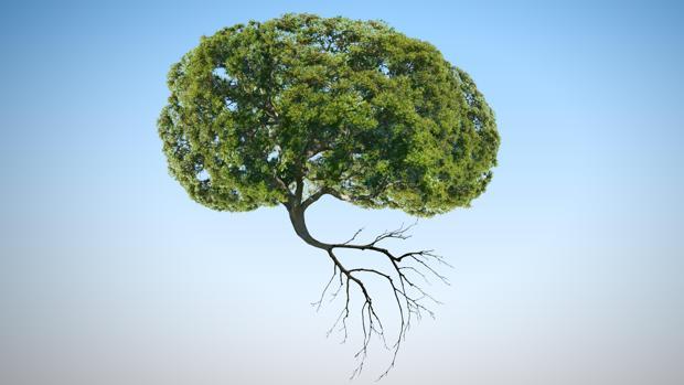 La neurobiología vegetal dice que las plantas tienen el equivalente a un cerebro en las raíces