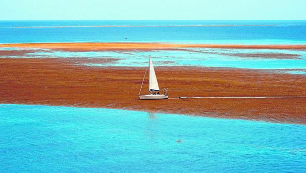 El sargazo cerca del archipiélago francés de Guadalupe en el Caribe