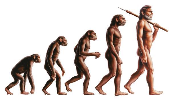 La ilustración de la evolución humana no refleja la realidad de la teoría de Darwin