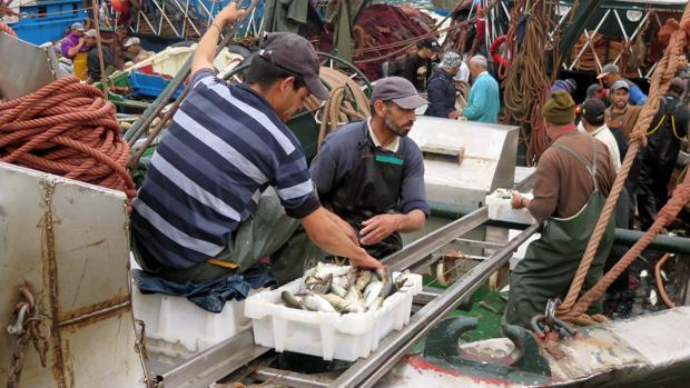 Pescadores en el puerto de Dajla