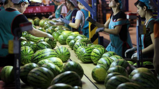Foto de archivo de una empresa hortofrutícola en El Ejido, Almería
