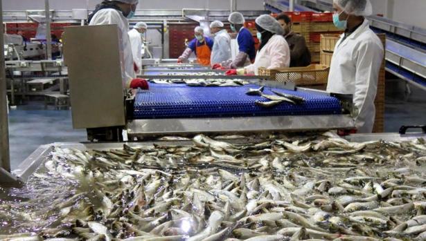Fábrica de industria pesquera en Dajla