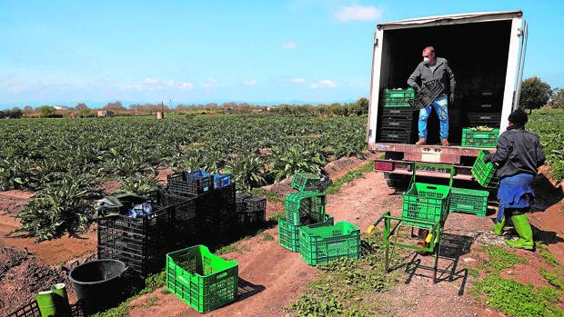 La subida del salario mínimo da la puntilla a autónomos, agricultores y...