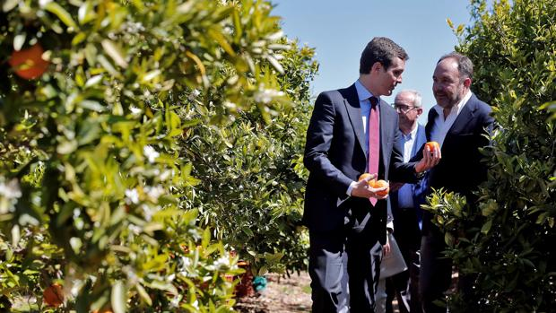 El presidente del PP, Pablo Casado, ha visitado un campo de naranjas en La Pobla de Vallbona (Valencia)