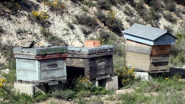 Paneles de abejas en un campo agrícola