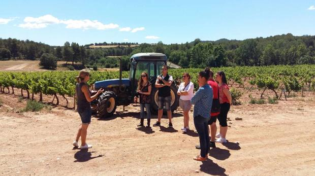 Una visita guiada en unos viñedos del Bages