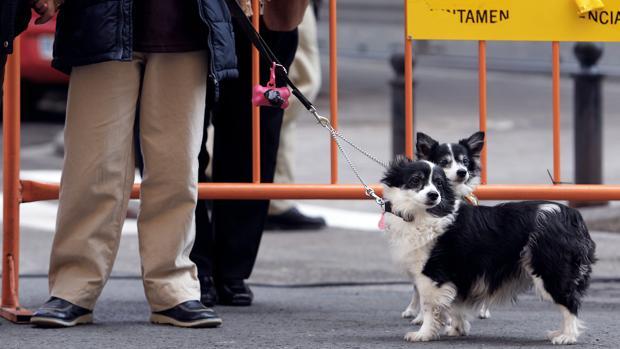 Imagen de dos perros en las calles de Valencia