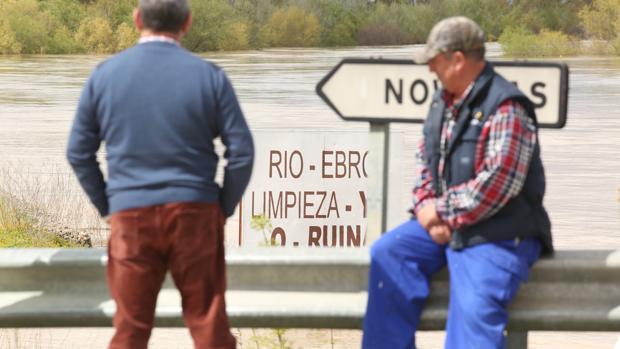 Los pueblos ribereños llevan años quejándose de la falta de limpieza del Ebro