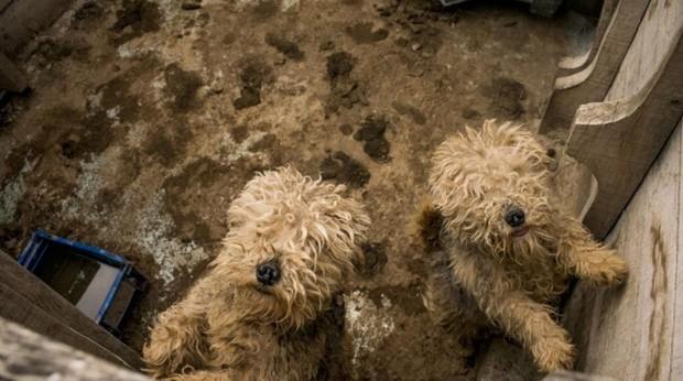 El criadero mantenía a los cachorros rodeados de excrementos