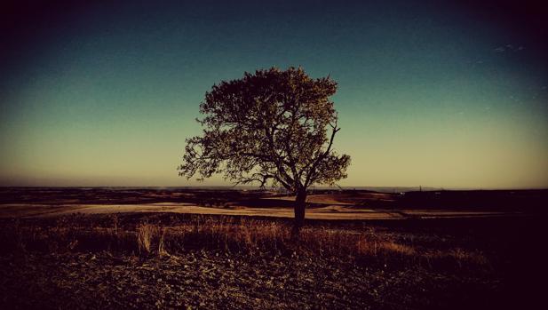 Árbol siolitario en el páramo sagreño