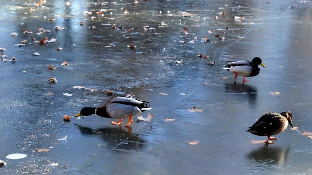 Salamanca y Valladolid, entre las provincias con alerta de frío este viernes