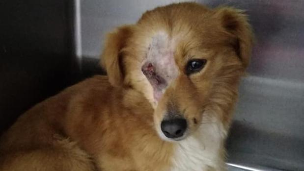 Imagen facilitada por Libera y Fundación Franz Weber del animal maltratado