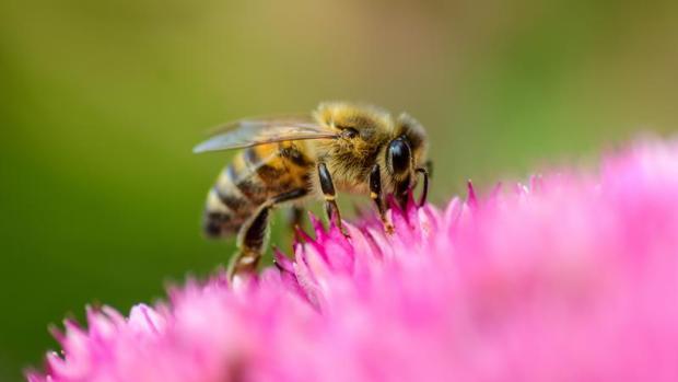 Una abeja fue la causante de la muerte de un vecino de Lugo