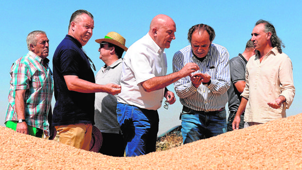 Carnero presenta la estimación de cosecha de cereales de la presente campaña junto a las opas